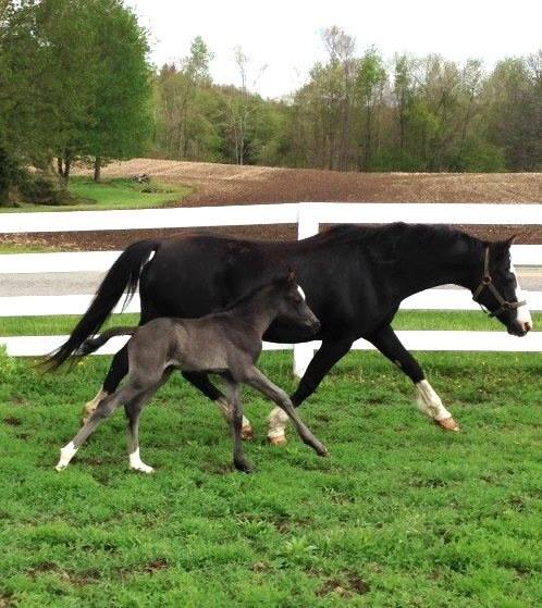 oops and 2014 colt