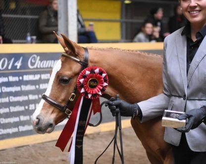 royal 2019 tori foal k 2